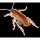 Засоби проти комах